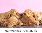 Stock photo english cocker spaniel puppy sleeping 94828765