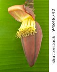 Banana Flower On Banana Leaf