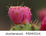 Prickly Pear Cactus Fruit  ...
