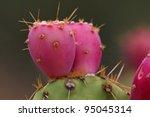Prickly Pear Cactus Fruit  ...