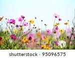 daisy flower against blue sky...   Shutterstock . vector #95096575