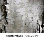 Birch Trunk Bark