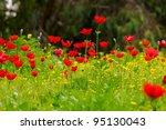 Wild Anemone Flower Spring Field