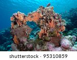 Small photo of Stylaster Corals, Rongelap Atoll, Marshall Islands, Pacific Ocean