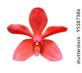 Red Orchid Isolated On A White...