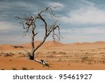 Dead Acacia Trees In Desert ...