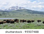 Bison Herd In A Valley In...