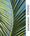 Palm Tree Leaf On The Blue Sky