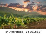 Panorama Of Vineyards On The...