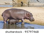 Hippopotamus (Hippopotamus amphibius) and its baby at the Hippo pools in Tanzania's Serengeti National Park - stock photo