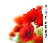Poppies White Background  Gree...