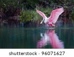 Rosette Spoonbill In The...