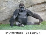 Baboon in Bio-park Valencia. - stock photo