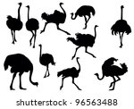 Ostrich Silhouette Collection ...