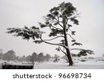 A big tree in Bradgate park with snow, Leicestershire, England - stock photo