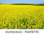 Rapeseed field near Loughborough, England - stock photo