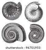 Shell Fossils  Tertiary Period...