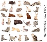 Stock photo collection of a cats in different poses isolated over white background 96714097