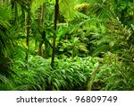 tropical garden in cairns ... | Shutterstock . vector #96809749