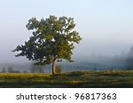 Solitary tree in a moor in the morning - stock photo