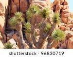 joshua tree big rocks yucca...
