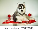 little puppy of siberian husky | Shutterstock . vector #96889183
