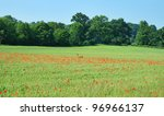 an english rural landscape with ... | Shutterstock . vector #96966137