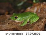 treefrog   Shutterstock . vector #97292801