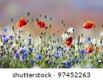 Abundance Of Blooming Wild...