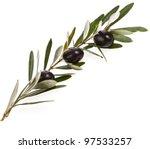 black olives in olive tree... | Shutterstock . vector #97533257