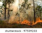 Bush Fire In Eucalyptus Forest