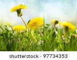 Spring Flowers  Dandelion