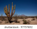 Cactuses and volcano in the desert of Baja California, Mexico - stock photo