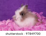 Portrait of adorable bunny with feathers on purple background - stock photo
