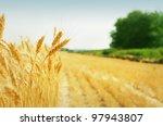 yellow grain ready for harvest... | Shutterstock . vector #97943807