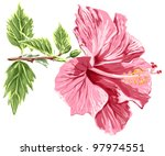 Hibiscus flower - vector / eps10 - stock vector