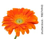 Closeup Of An Orange Gerbera...