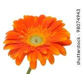 Closeup Of An Orange Gerbera...