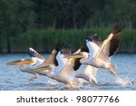 White Pelican flock in flight - stock photo
