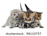 Stock photo group of small weeks old kittens walking towards 98110757