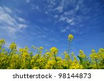 Rapeseed with cloud and blue sky - stock photo