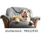 happy lazy dog english bulldog...   Shutterstock . vector #98312933