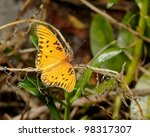 Small photo of Gulf Fritillary or Passion Butterfly (Agraulis vanilla), perching on a plant in the Florida Everglades National Park