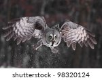 Great Grey Owl or Lapland Owl lat. Strix nebulosa - stock photo