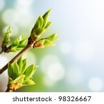 green buds on branches in... | Shutterstock . vector #98326667