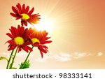 Three red flowers under the bright sun-rays and a warm sky - stock photo