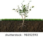 plant in soil section | Shutterstock . vector #98352593