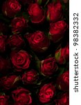Red roses on a black background. Low key. - stock photo