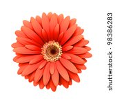 Stock photo red daisy flower isolated on white background d render 98386283