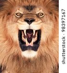 direct frontal shot of a lion... | Shutterstock . vector #98397167